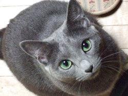 Cat555_2