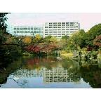 小石川後楽園は紅葉真っ盛り