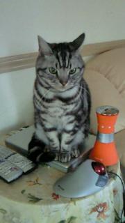 フィガロと遊んだ