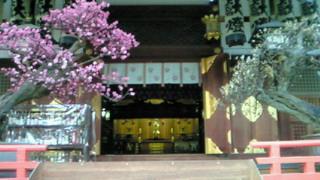 大阪天満宮の紅梅白梅