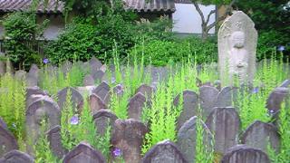 桔梗とにゃんこを訪ねて奈良町へ