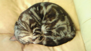 寝ているフィガロを起こしたら怒った