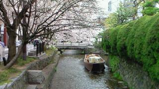 春の装いの高瀬川一之船入