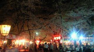 若者の花見スポットは衣笠の平野神社