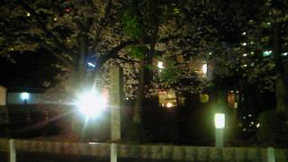 夜桜おとみは毎日が花見