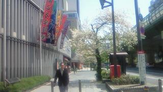 国立文楽劇場前の葉桜