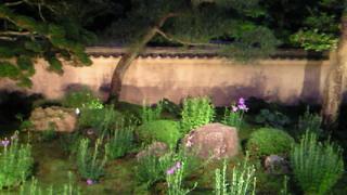 東福寺天得院の桔梗の庭・ライトアップされて幽玄です。