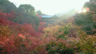 朝の東福寺通天橋