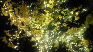 銀杏の葉に黄色のイルミネーションは映えます。