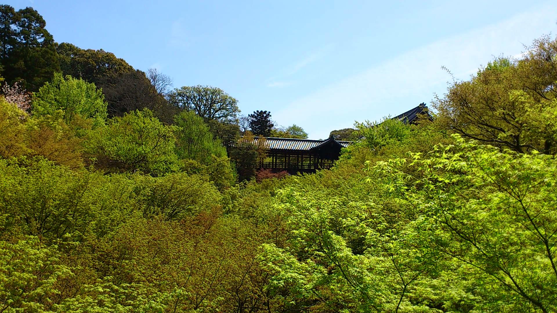 東福寺の青もみじがまぶしい!