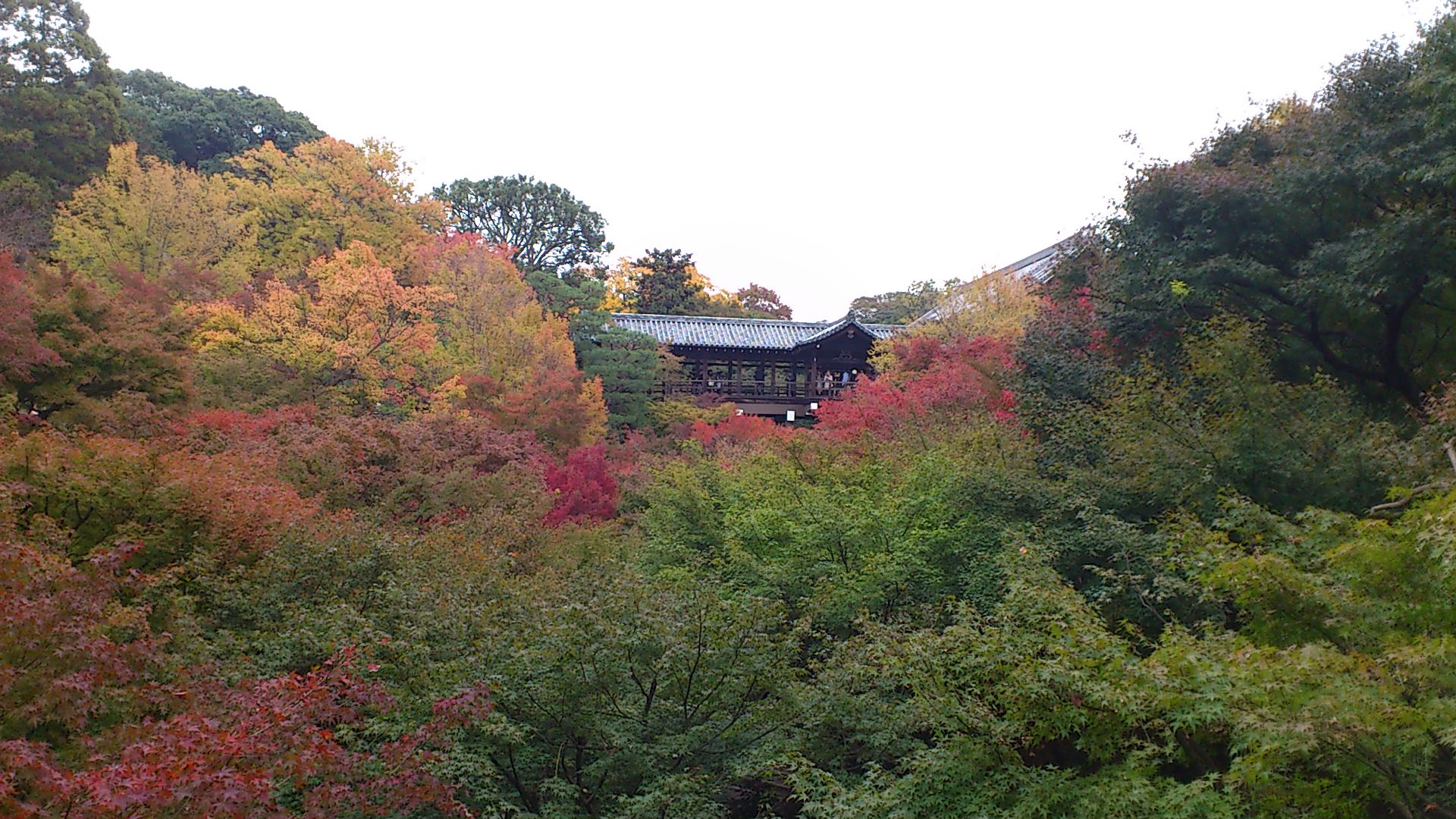 今日の東福寺通天橋はこんな感じ