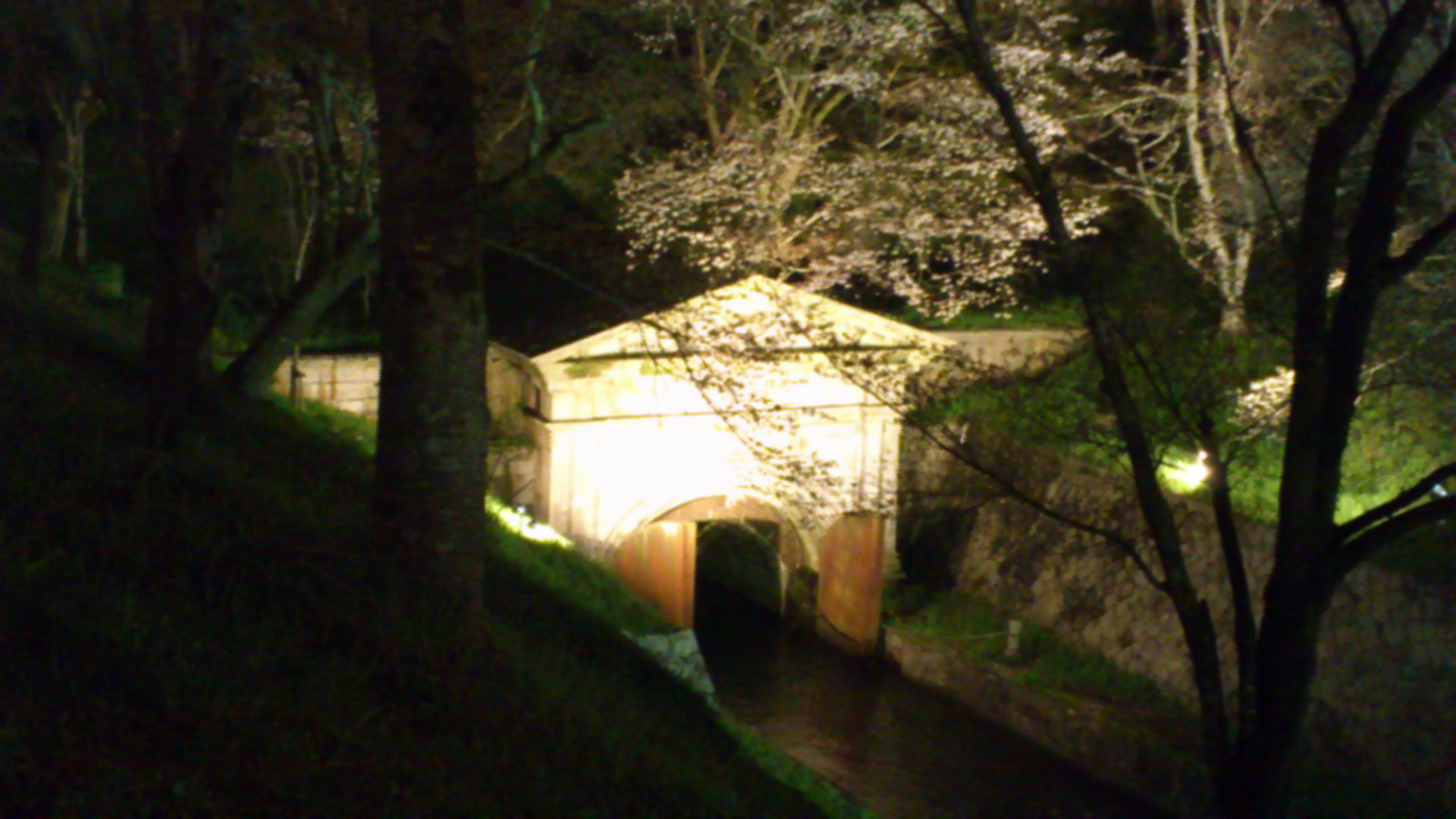 今夜の桜は三井寺下。琵琶湖疎水取水口の桜。