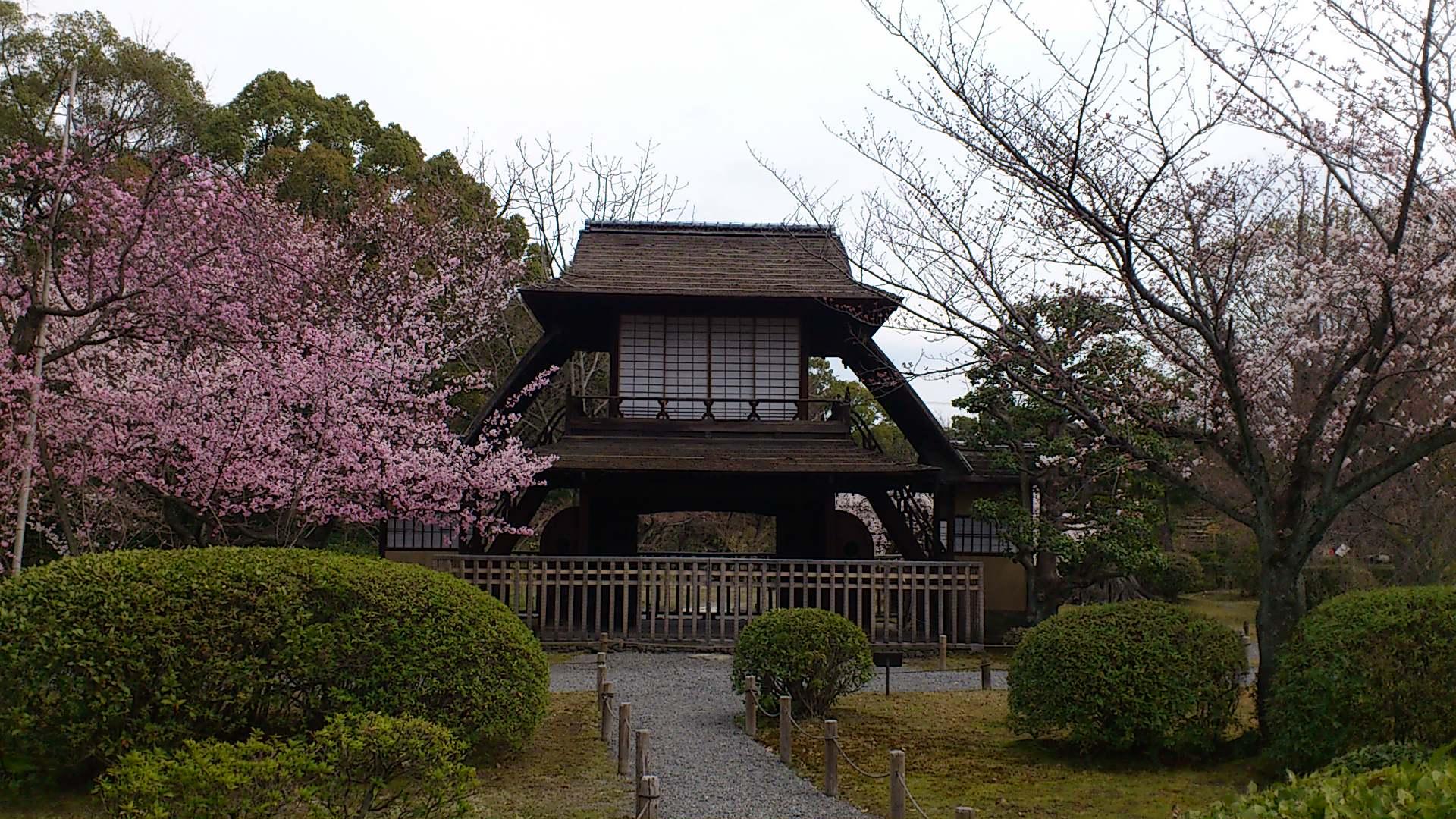 春です。花です。東本願寺渉成園・枳殻邸の春