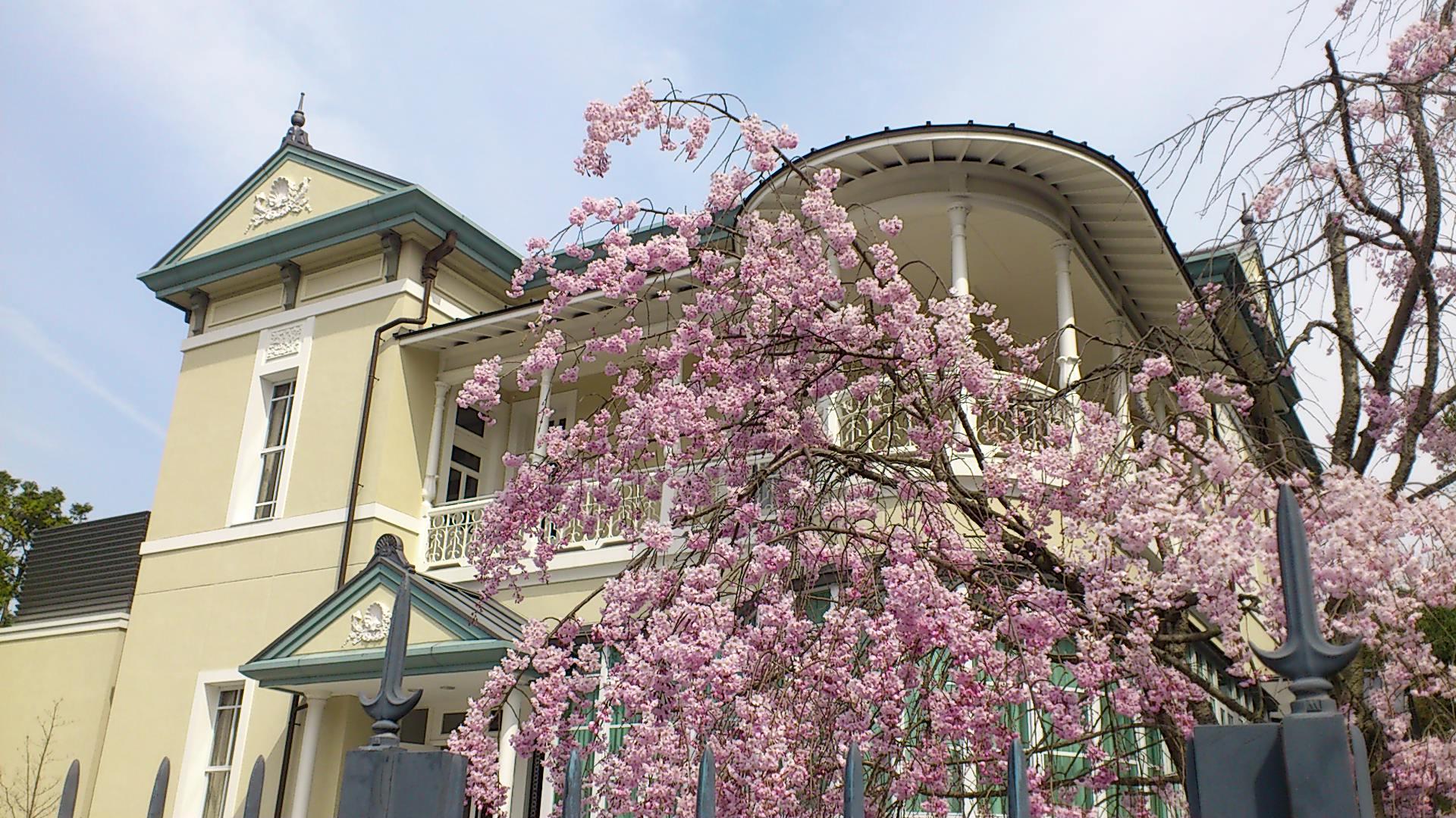 平成12年に復元された京都女子大学建学記念館。「錦華殿」桜が彩り美しいです.